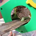 Vorsichtig kroch der kleine grüne Wurm in sein neues Häuschen!