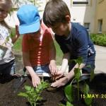 Pflanzen ... Löcher stecken, Pflanze rein, andrücken