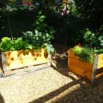 ... und es gibt Hochbeete mit diversen Kräutern und Gemüsepflanzen ...