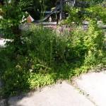 ... extra schöne Wildblumenecken...